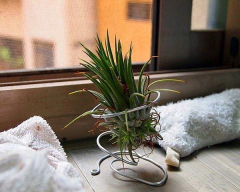 Растения, которым не нужны горшки