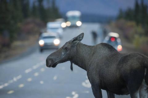 Жителям Аляски порекомендовали готовиться к ядерному удару