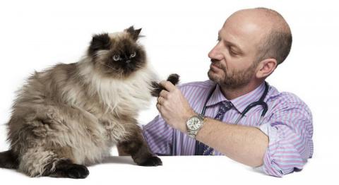 Как выбрать ветеринарную клинику? (полезная информация для любителей живности)