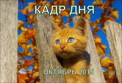 Кадр дня: Ми-ми-ми!))