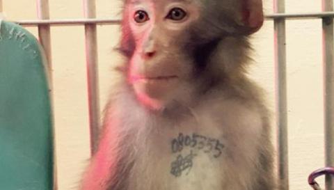 История обезьяны Анди тронет ваши сердца!