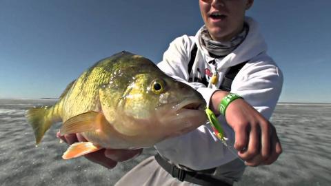 Зимняя рыбалка на окуня доставила массу удовольствий!!!