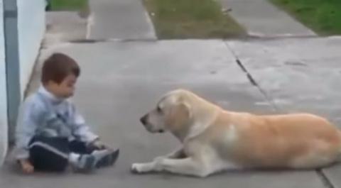 Любовь собаки к малышу с синдромом Дауна - Более милосердную вещь я никогда не видел!