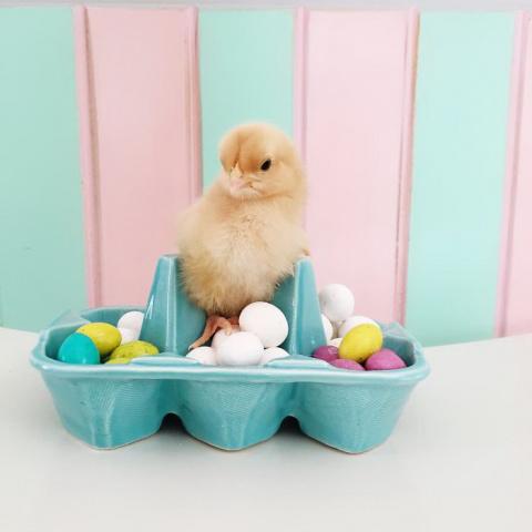 Цыплята в пасхальном интерьере