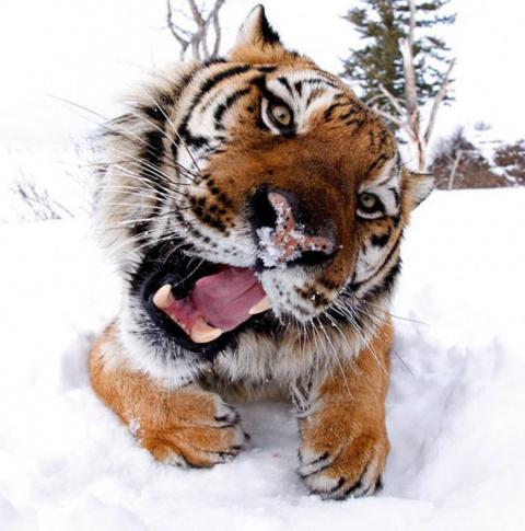 Опасная фотосъемка диких животных Джонатана Гриффитса