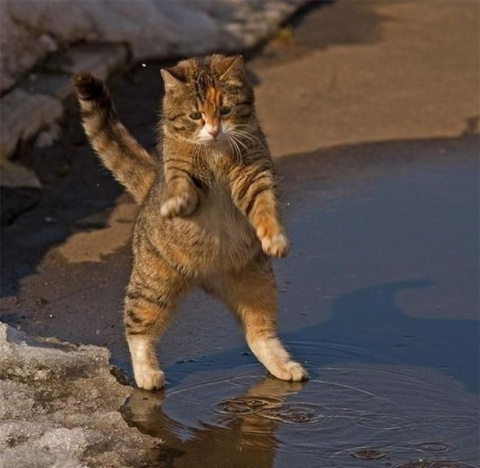 Очень забавный кот