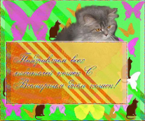 Всемирный День кошек!