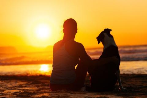 Чему вас может научить ваша собака?