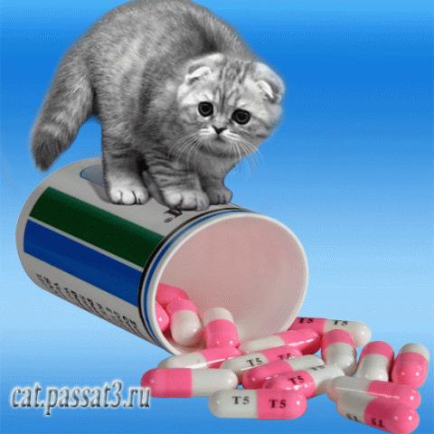 Как давать коту таблетку)))