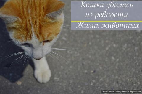 Кошка убилась из ревности,а …