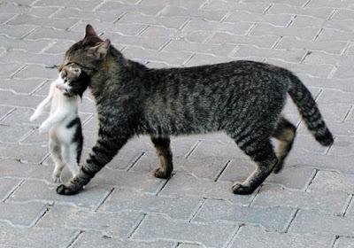 Кот Мазай лучший папа в мире