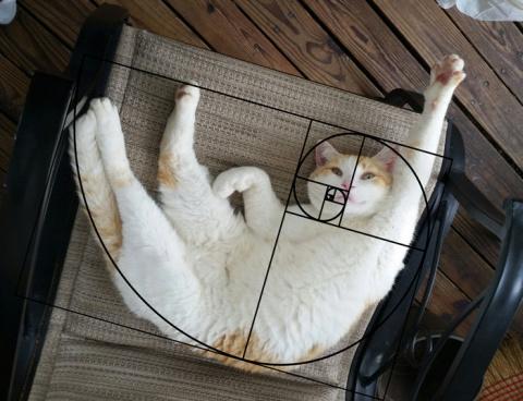 10 последовательностей Фибоначчи в доказательство того, что коты идеальны