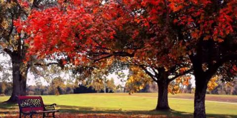 """невероятно красивая мелодия - Мишель Легран """"Осенняя грусть"""""""