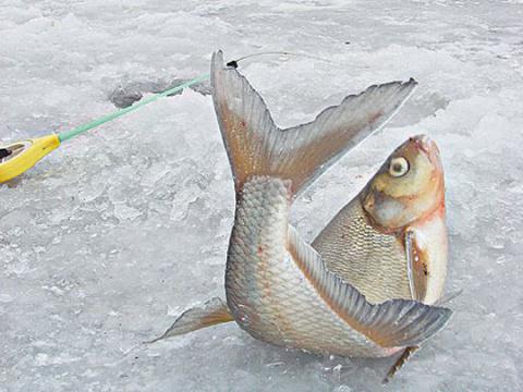 Мужики рыбаки и милые рыбачки , как там погода по России. Рыбу ловим?