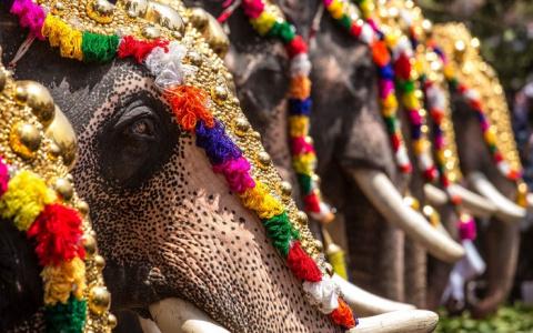 Толпа в Индии забросала слон…