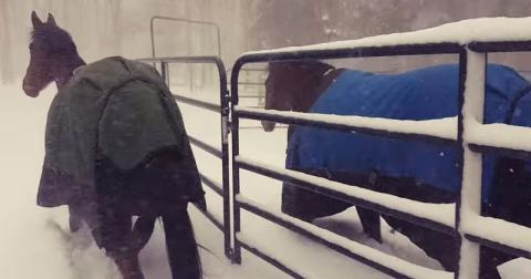 Хозяин выпустил своих лошаде…