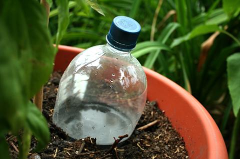 Устраиваем растениям капельный полив