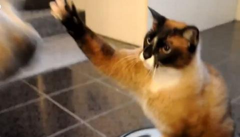 Мобильный кот атакует! видео