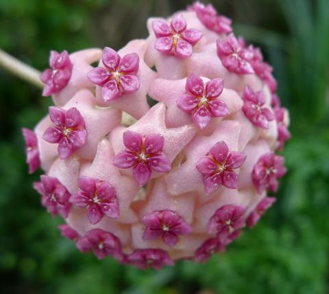 Геометрия в природе: 18 потр…