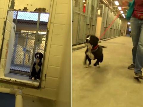 Пёс из приюта не смог сдержать эмоций, когда понял, что его пришли забрать, а не усыпить