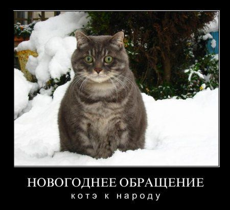 Котоматрица новогодняя