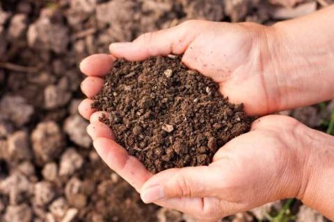 Андрей Туманов: в поисках идеальной почвы