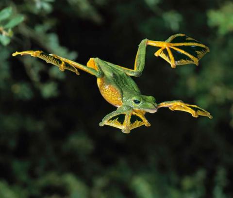 20 самых крутых лягушек и жаб из всех существующих
