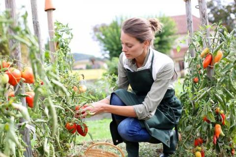 Сезонные работы в саду и ого…