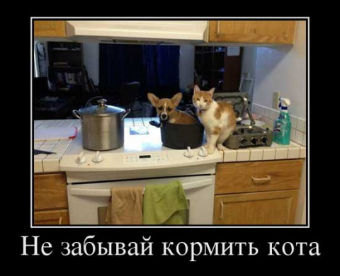 Демотиваторы про кошек))
