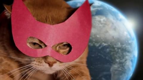 КОШКИН ДОМ. О котах-героях