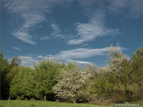 Путешествие в край цветущих диких яблонь на Юг Дальнего Подмосковья