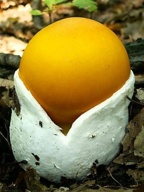 27 грибов, которые доказывают, что у природы с фантазией все в порядке