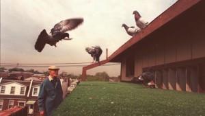 Птицы не столь уж глупы: гол…