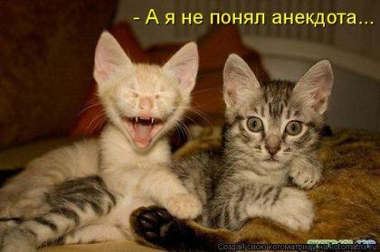 Субботняя котоматрица
