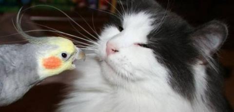 Наглый попугай