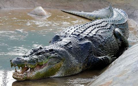 На снимках: гиганты из мира природы — самые крупные животные в мире!