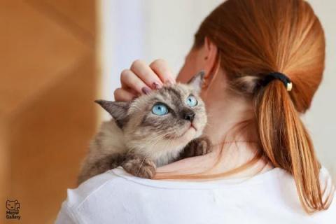 Сколько лет живут кошки в до…