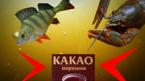 Реакция рыбы на КАКАО! Подво…