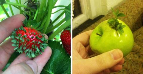 14 проросших овощей и фрукто…