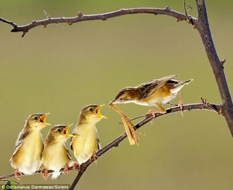 Удивительные фотографии птен…
