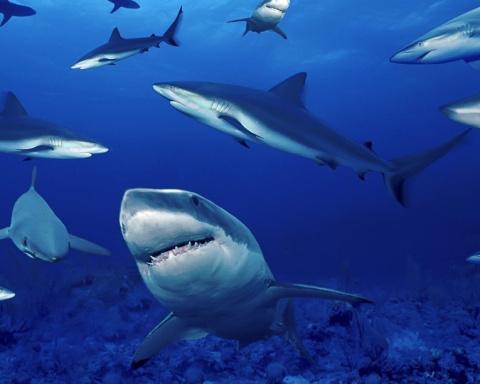 В Австралии акула откусила ноги японцу