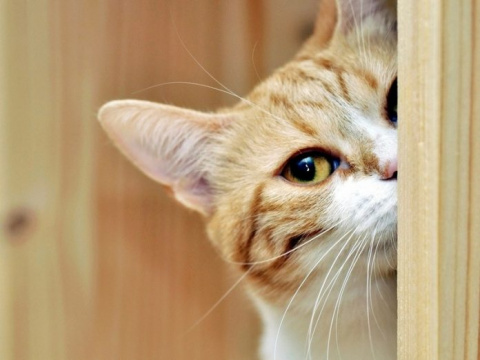 Один из котов украл колбасу.…