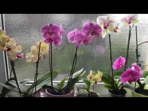 Ошибки в уходе за орхидеями