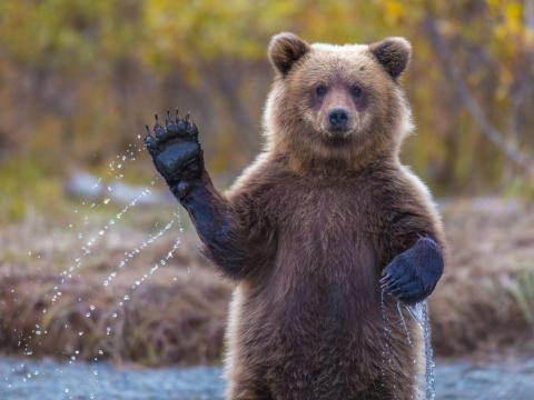 Как звери: туристы из России избили медведя в Польше