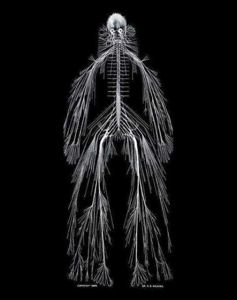 Пучок Нервов (личноефото)