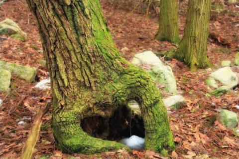 Пес застрял в стволе дерева …