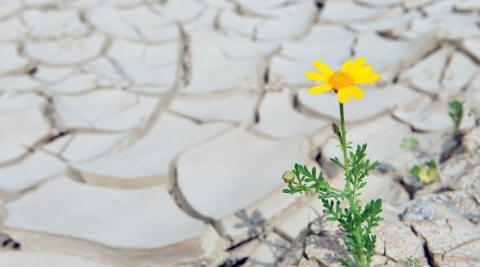 9 садовых цветов, которые можно вообще не поливать