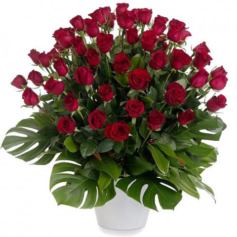 Черная роза - эмблема печали, красная роза - эмблема любви...