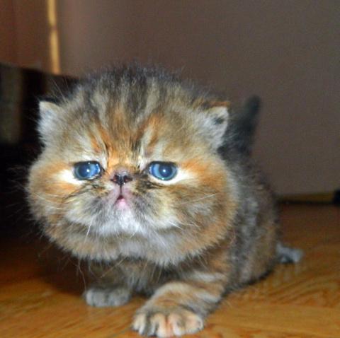 Купить домик-дряпка для кошек городок угловой (природа