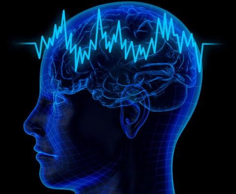 Наш мозг имеет способность изменяться, восстанавливаться и даже